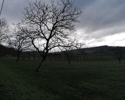 Leeruitstap reliëf : de wijngaardberg  (maandag 15 maart)